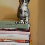 funny-pictures-kitten-is-on-a-stack-of-books